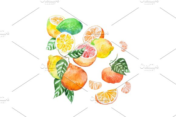 Hand-painted Illustration Of Citrus Mix With Leaves Drawn With Watercolour On White Paper