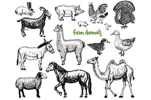 Farm Cute Animal big set. Vector illustration. Camel, horse, goat, pig, donkey, mountain sheep, llama or alpaca, turkey, cock. village pets. engraved sketch, hand drawn vintage style.