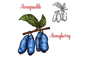 Honeysuckle vector sketch berry icon