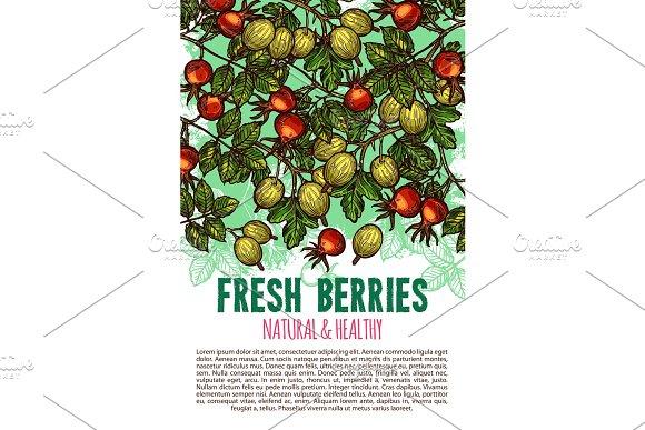 Fresh Berries Vector Sketch Poster