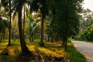 Sunset Light shine through palm trees in tropical jungle with road