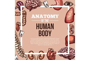 Human organs vector sketch body anatomy poster