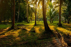 morning sunlight in tropical forest