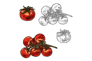 Cherry tomatoes vector sketch vegetable icon