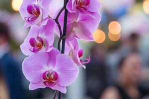 Orchids at gala event.