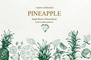 Pineapple Vector Collection