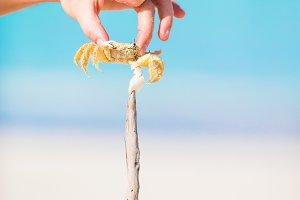 Closeup live crab at white beach