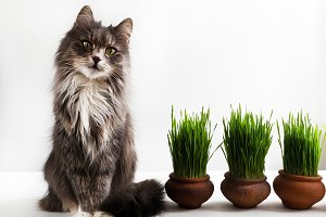 Sweet kitten and green grass in pots