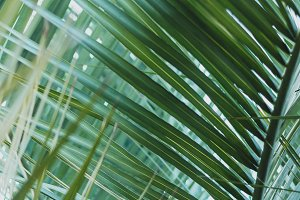 Summery Palm Leaves