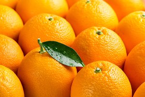 Close up of orange fruits.