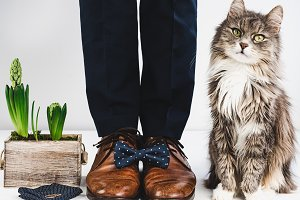 Groom, rings, bow tie and cat