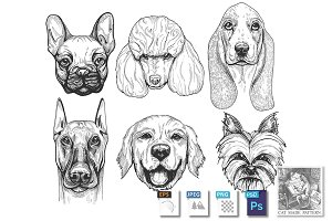 Dog breeds portraits