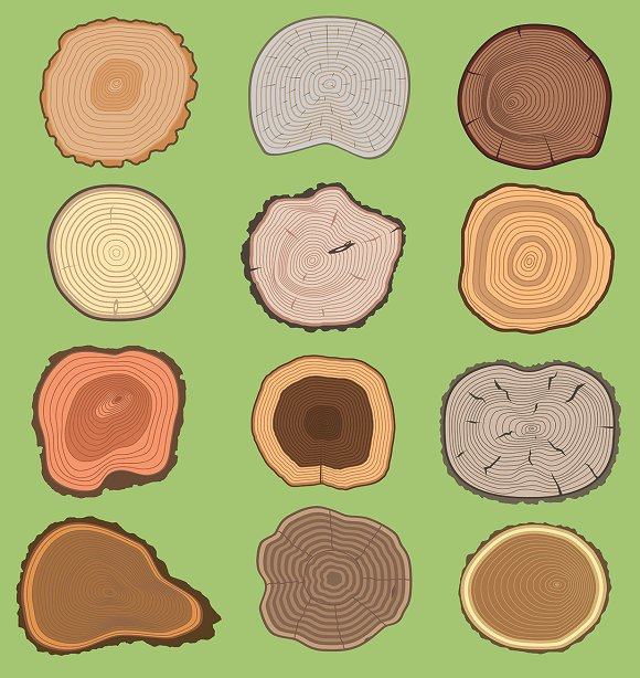Wood Tree Texture Wooden Vector