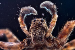 Wolf spider in space