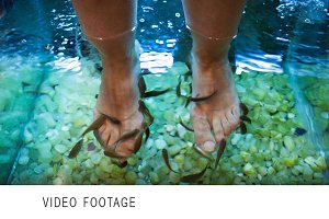 Feet spa treatment with fish