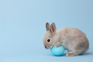 Easter bunny with egg on blue