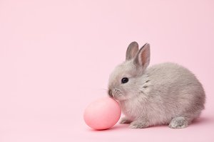 Easter bunny with egg on pink