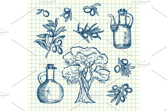 Vector Hand Drawn Olive Branches Bottles And Tree On Cell Sheet