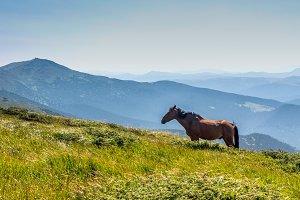 Stallion in the wild.