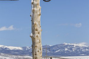 Vertical - Ranch Gate and Snow