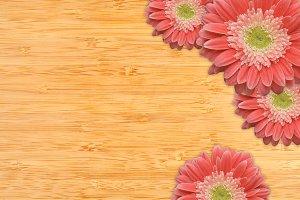 Pink Gerber Daisies, Wood Background