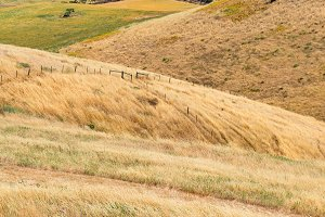 Yellow dry grass on hill face background