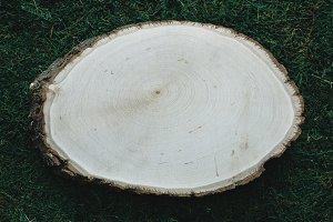 Wood Slice on Moss