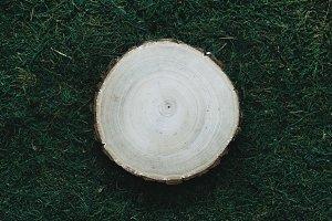 Round wood slice on moss