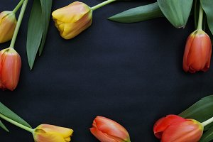 Tulips on black paper top view