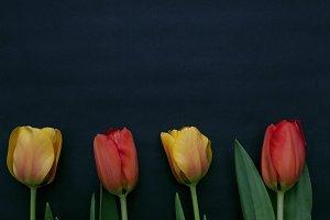 Tulips on Black Kraft Paper