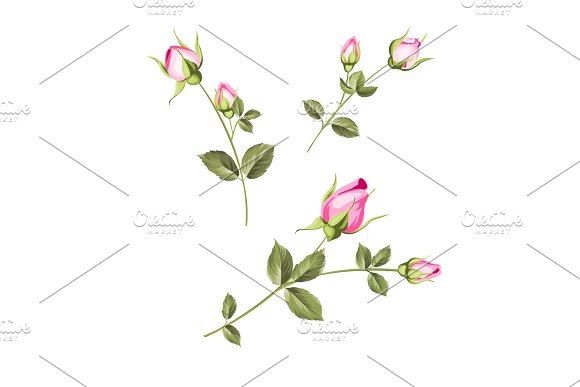 Spring flowers set. in Illustrations
