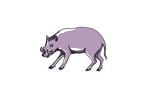 Babirusa or Deer Pig Drawing