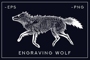 skeleton of a dead wolf. engraving