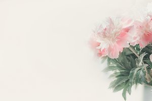 Pastel pink white peonies template