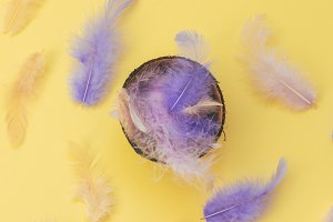 colored feathers inside the coconut