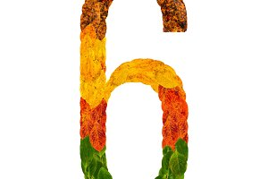 Autumn leaves bright number six 6. Natural multi layers living leaves isolated on white background. Colorful character of alphabet letter font. Element nature for decoration, design inscription.