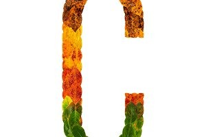 Autumn leaves bright letter C. Natural multi layers living leaves isolated on white background. Colorful character of alphabet letter font. Element nature for decoration, design inscription.