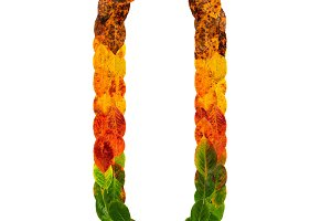 Autumn leaves bright letter Q. Natural multi layers living leaves isolated on white background. Colorful character of alphabet letter font. Element nature for decoration, design inscription.