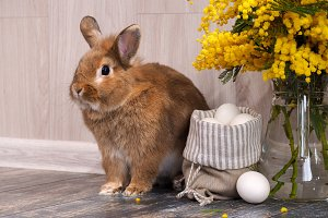 Easter still life with rabbit