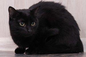 Black cat on the floor