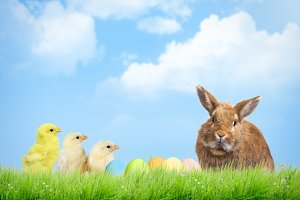 Easter eggs, chickens and rabbit