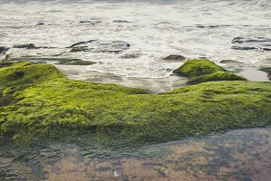 Green algae and rocks in the beach