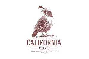 California State Bird Logo