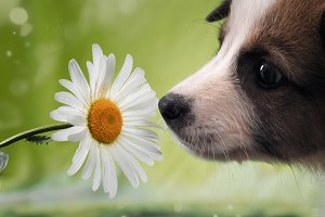 Dog smelling the flower. Funny puppy