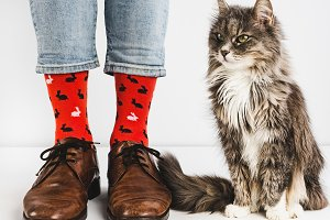 Bright socks and sweet kitten