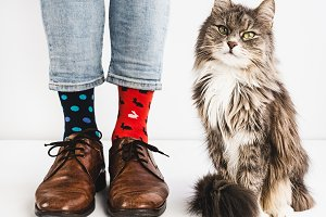 Funny socks and sweet kitten