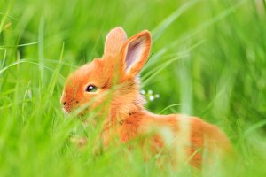 spring rabbit among green grass and flowers