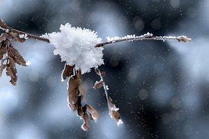 Winter Snow Crystal Tree