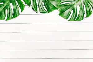 Frame of tropical leaves Monstera on
