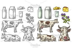 Set Milk farm. Cow clover box bottle